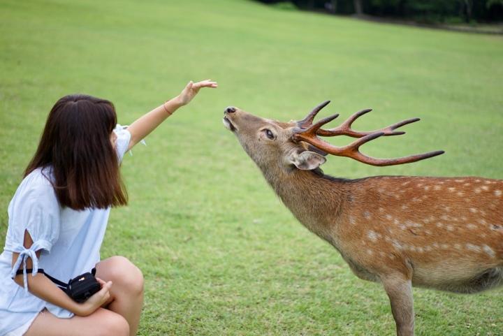 A day in Nara,Japan